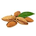 Sweet Almond Olie